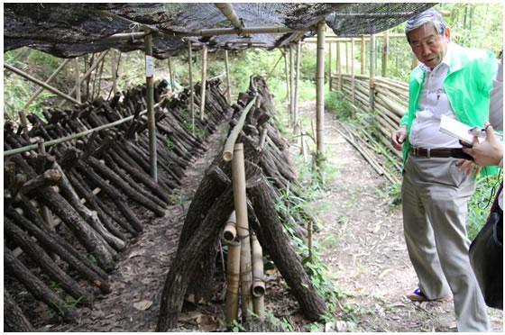 竹林内のしいたけ園