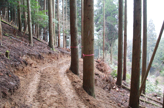 写真:山の中の作業道