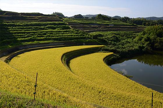 写真:地元で生まれ育った田村さんだからこそ撮れる棚田の風景