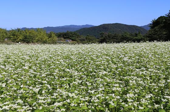 春来峠のそば処「てっぺん」名物の10割蕎麦
