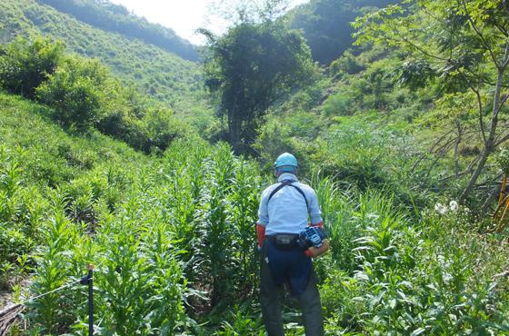 黒川のクヌギ植林の下刈りをする福田さん