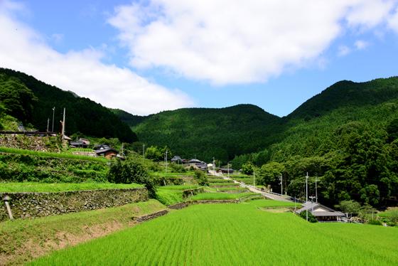 地元が一丸となって守り続ける日本棚田百選に選ばれた美しい風景