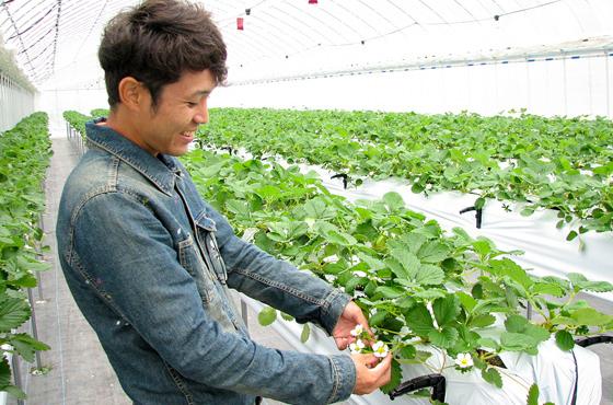 河野さんを驚かせた、西脇産イチゴの生産農家・佐藤慶明さん(佐藤果実工房)は東京からのUターン