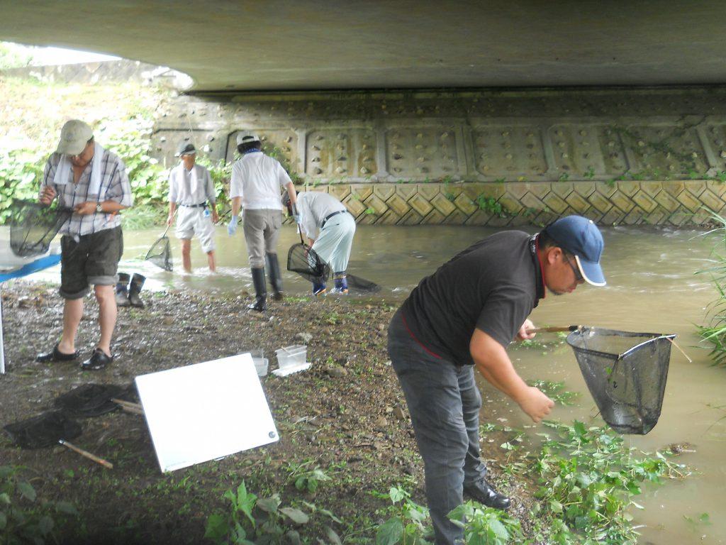 柏原川流域に生息する生物調査。