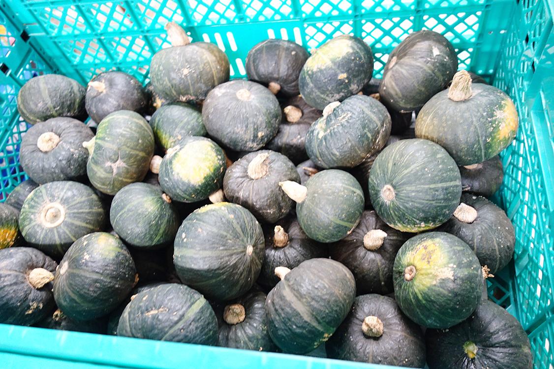 提供された、たくさんのカボチャ。野菜やお米、加工食品など様々な食品の提供を受ける。