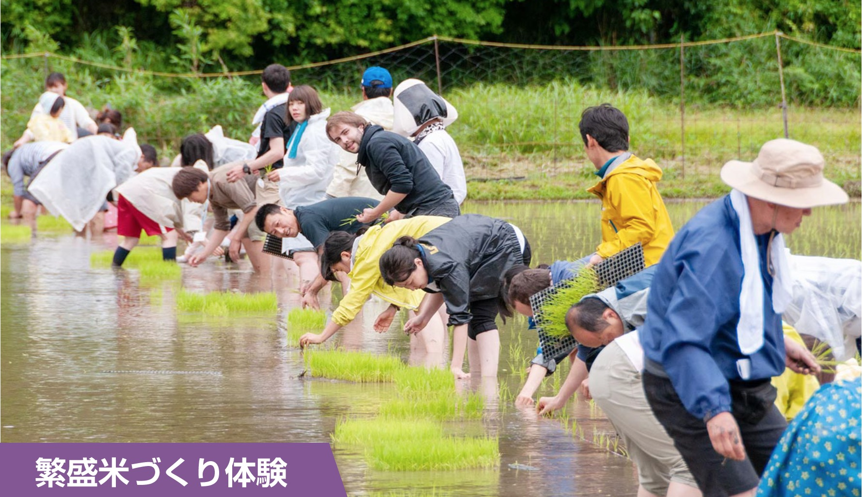 繁盛米づくり体験